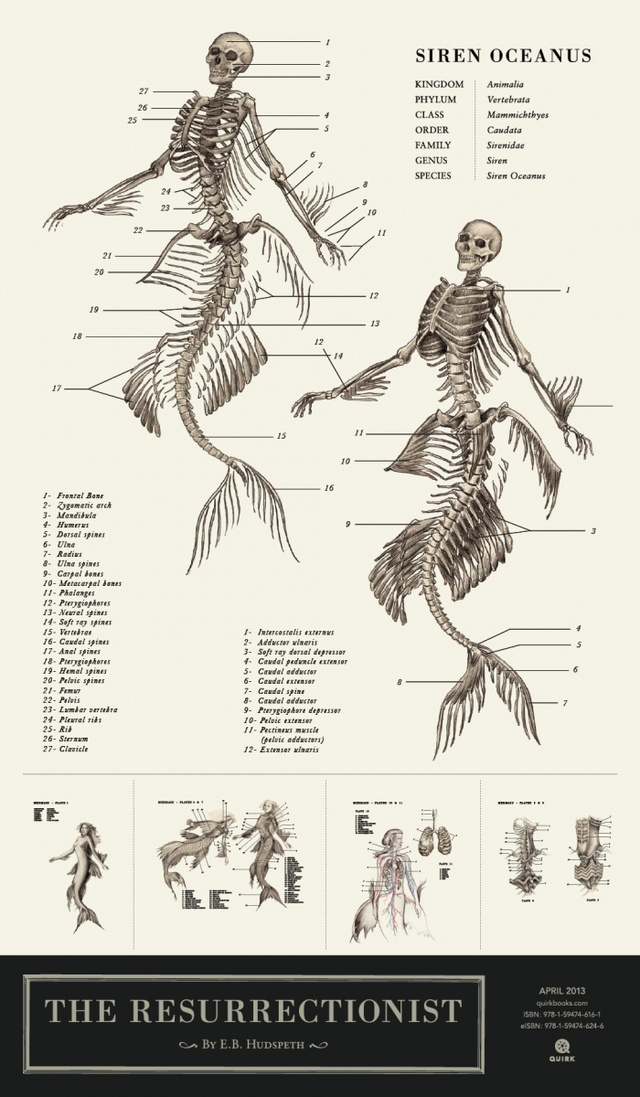 Anatomy of Mythological Creatures, E.B. Hudspeth. Via Curious History